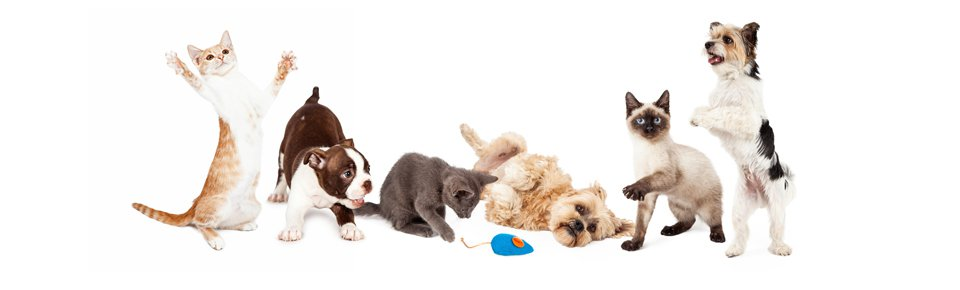Pet Supplies Banner Image